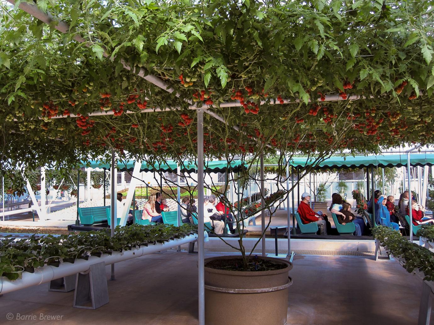 Epcot Tomato Tree