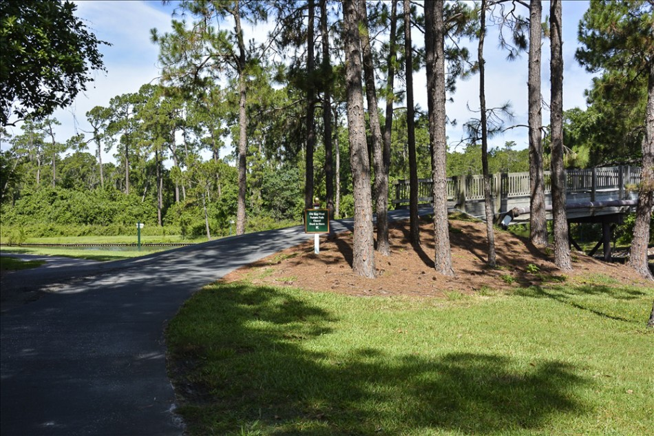 nature path 019