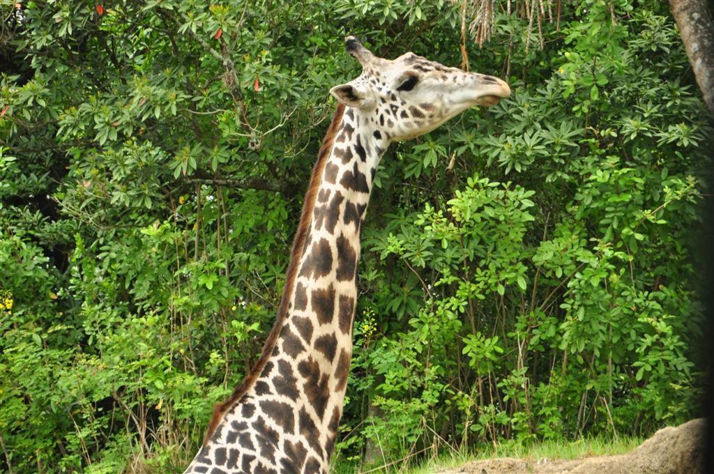 Wild Africa Trek 104
