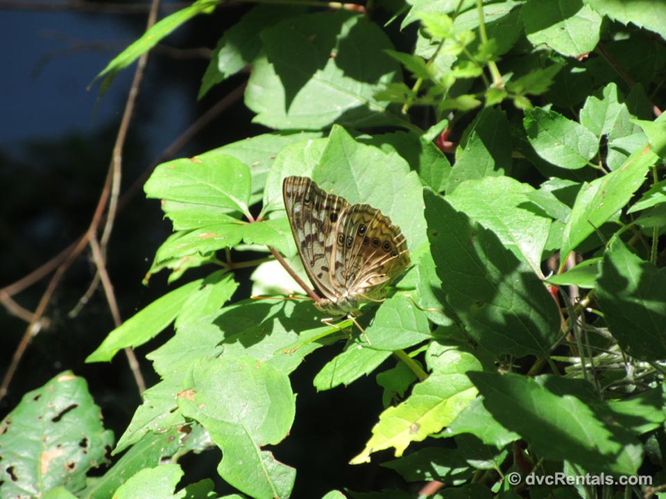 Circle B Bar Butterfly
