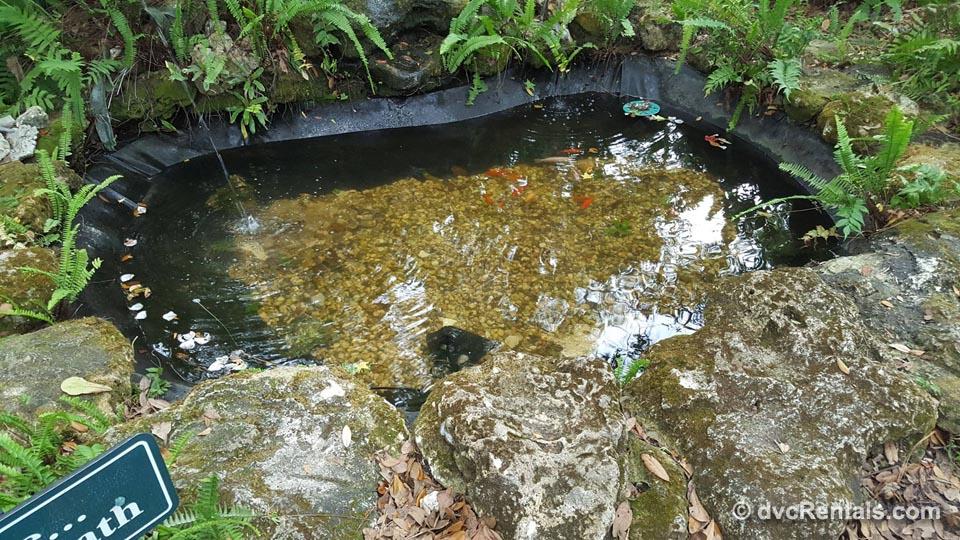 Pond at West Orange Trail