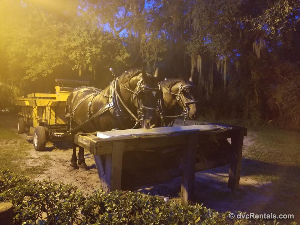Disney Wagon Rides