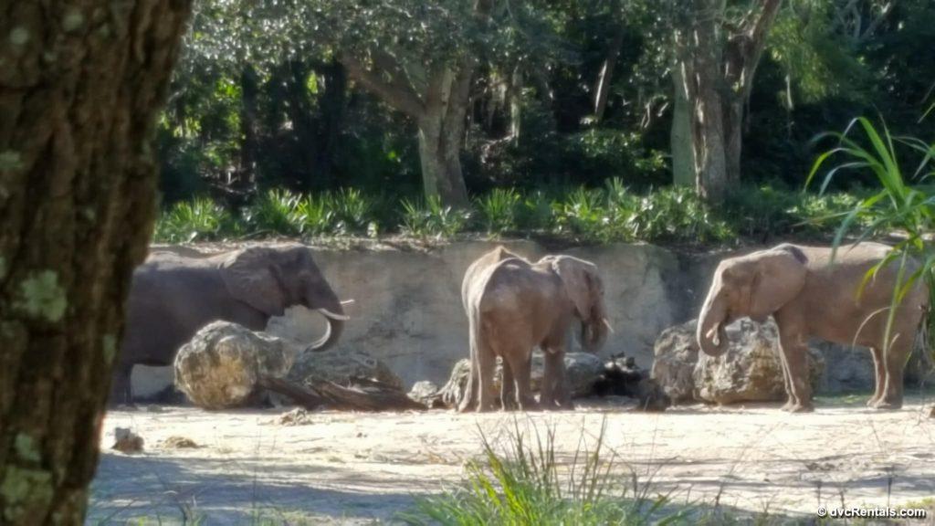 Three Adult Elephants