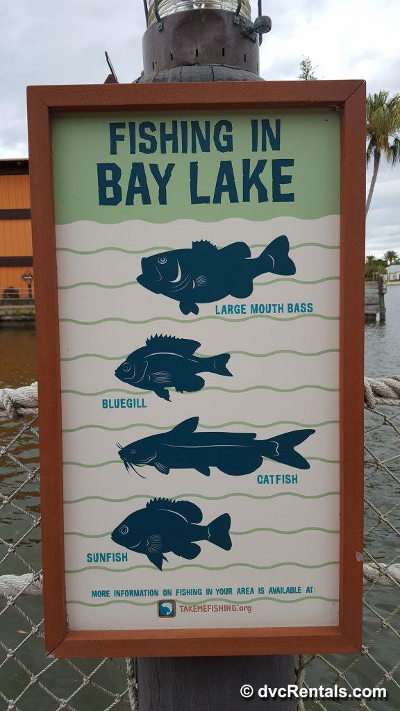 Fish Information Board Bay Lake