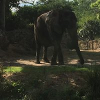 elephant as part of the Caring for Giants Tour