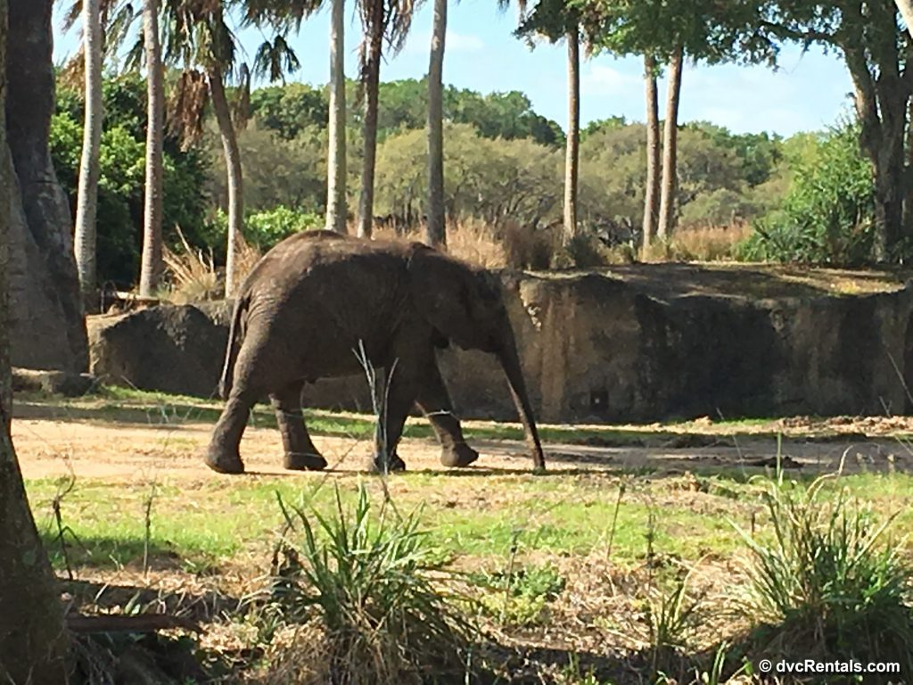 baby elephant as part of the Caring for Giants Tour