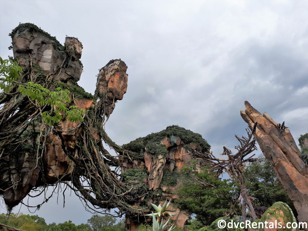 Floating Mountains within Pandora at Disney's Animal Kingdom