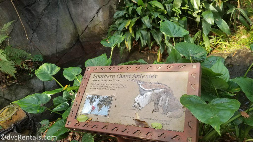 anteater sign at Disney's Animal Kingdom