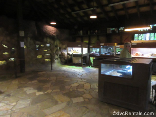 reptile house at Animal Kingdom