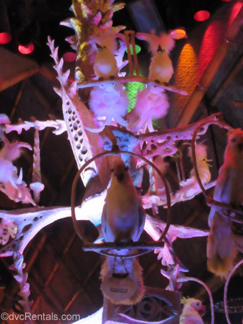 Singing birds from the Enchanted Tiki Room