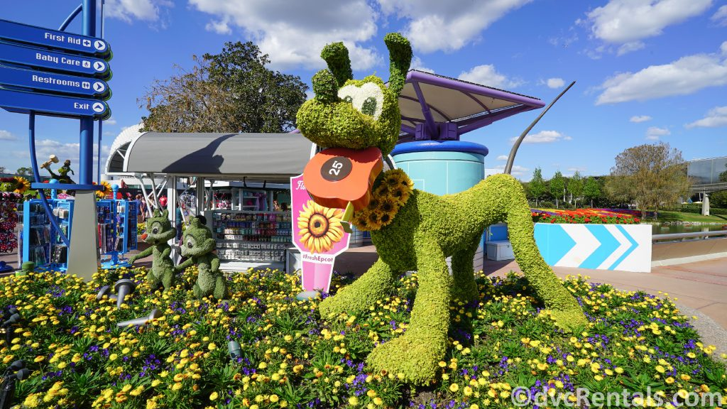 Pluto Topiary at the Epcot International Flower and Garden Festival