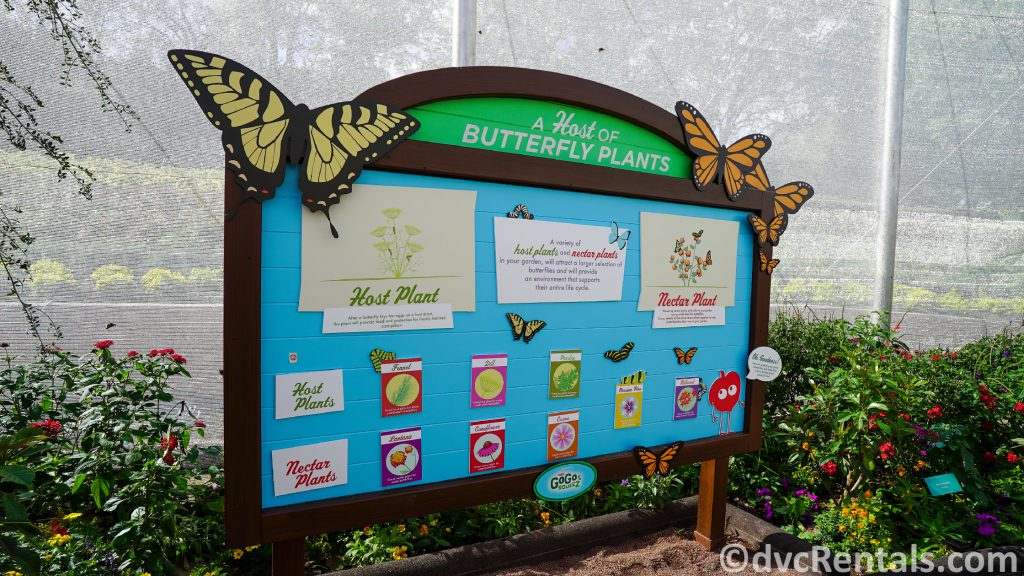 Inside the Butterfly House Topiary at the Epcot International Flower and Garden Festival