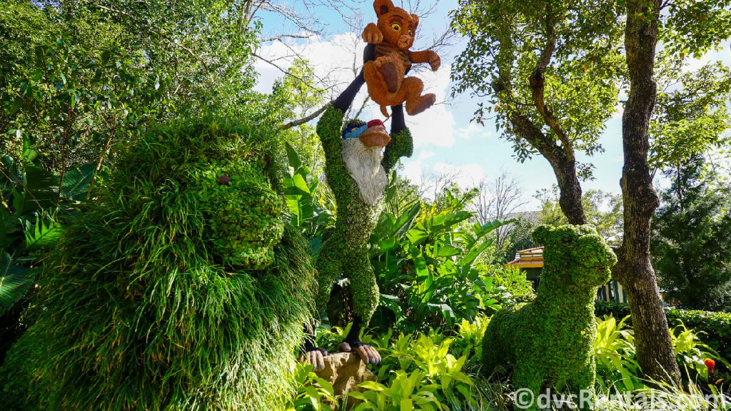 Lion King Topiary at the Epcot International Flower and Garden Festival