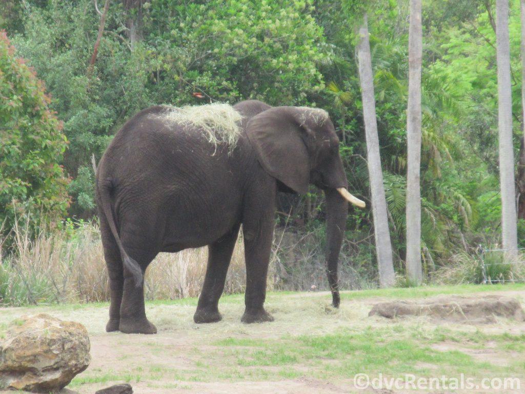 Elephants at the Wild Africa Trek
