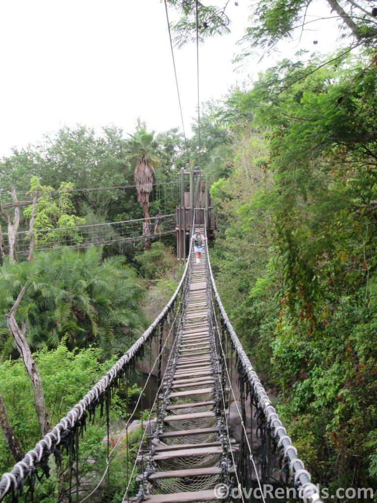 Rope bridge in the Wild Africa Trek at Disney's Animal Kingdom