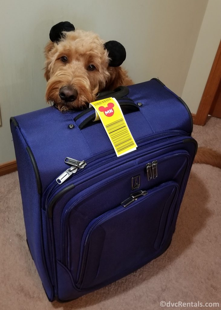 Suitcase with Yellow Luggage tags attached, with Team Member Kelly's dog next to it