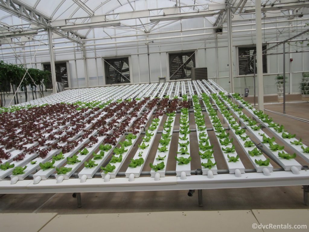 Greenhouses in the Living with the Land attraction