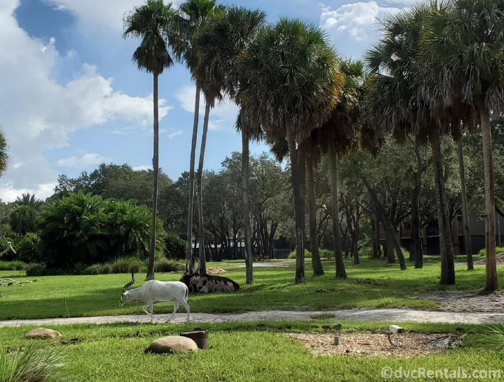 view of the savannah at Disney's Animal Kingdom Villas – Sanaa Restaurant