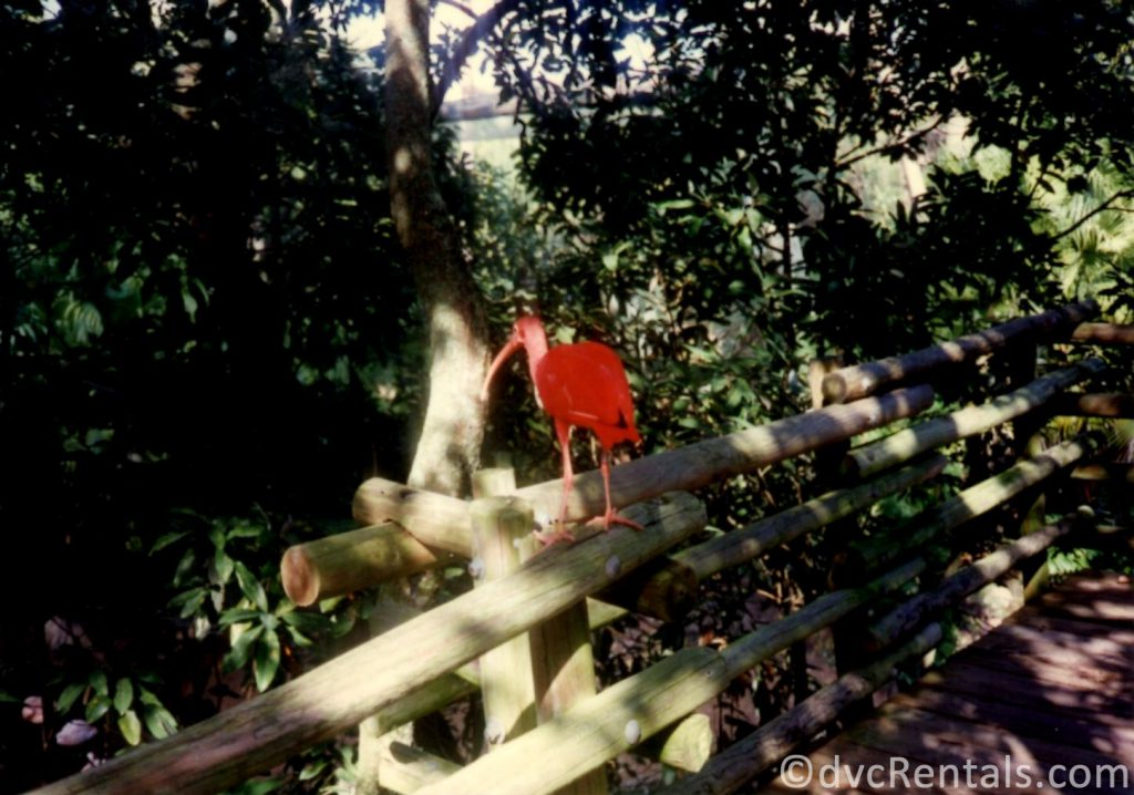 bird from Discovery Island
