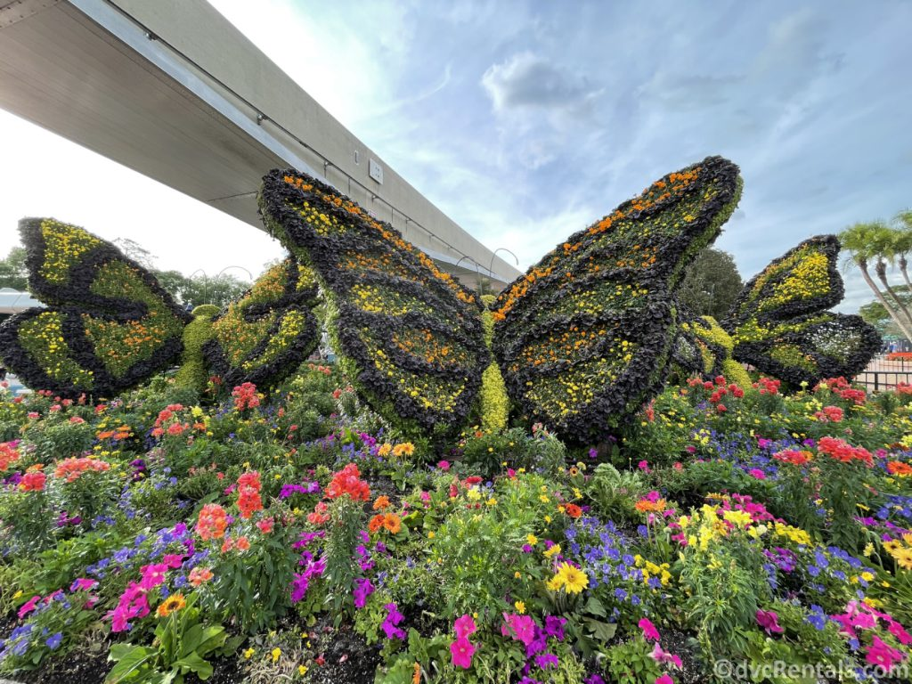 Butterfly topiaries at Epcot