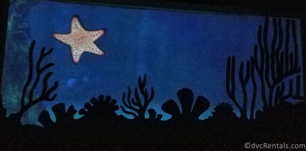 Star fish at the end of the ride
