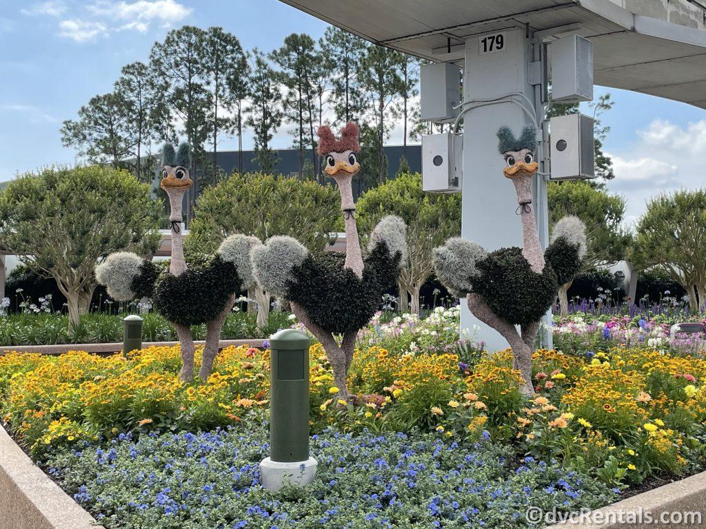 Ostrich topiaries from the Taste of Epcot International Flower & Garden Festival