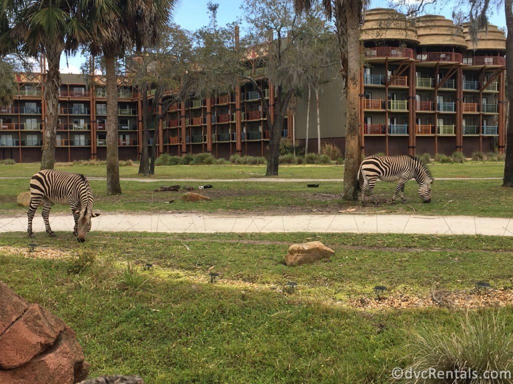 Savannah view at Disney's Animal Kingdom Villas
