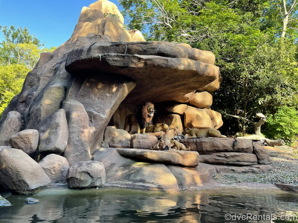 lion scene from the Jungle Cruise at Disney's Magic Kingdom